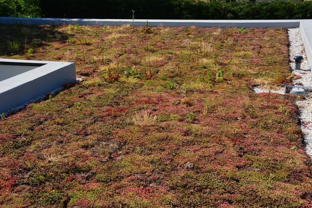 toiture vegetale Vendee
